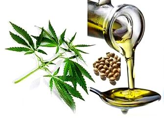 PressPac: Hempseed oil packed with health-promoting compounds