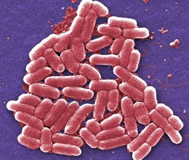 The Medical Bond: An entirely new way to attack urinary tract infections (UTIs)