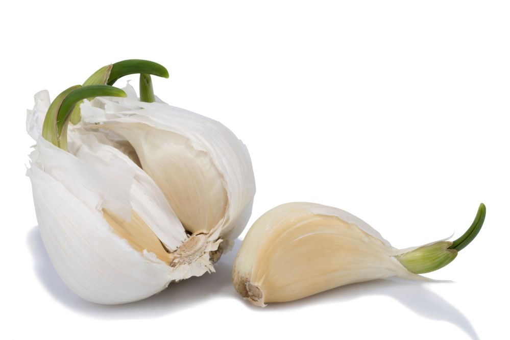 PressPac: Don't throw out sprouting garlic — it has heart-healthy antioxidants