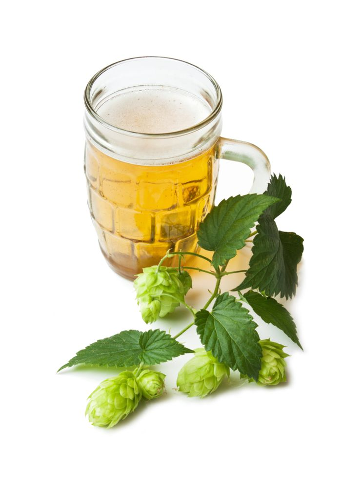 PressPac: Leaves from hops could fight dental diseases