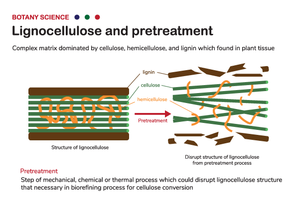Lignocellulose-pretreatment-600pxwide.png